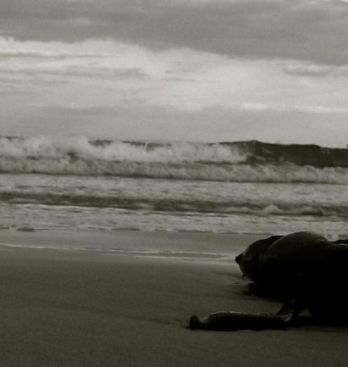 evening tide1